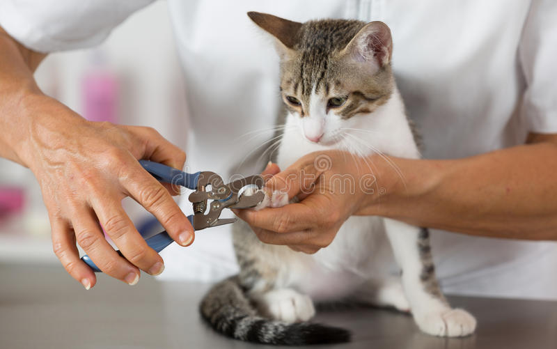 Cat at the hairdresser royalty free stock photography