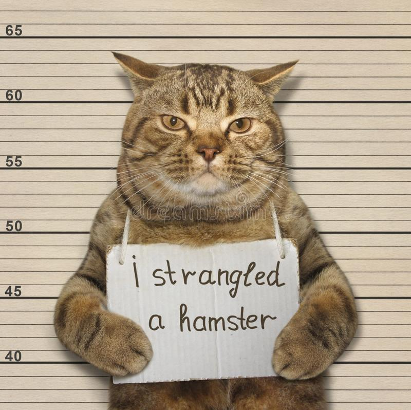 A cat and a hamster stock image