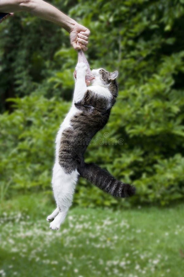 Cat hanging on a raw turkey leg