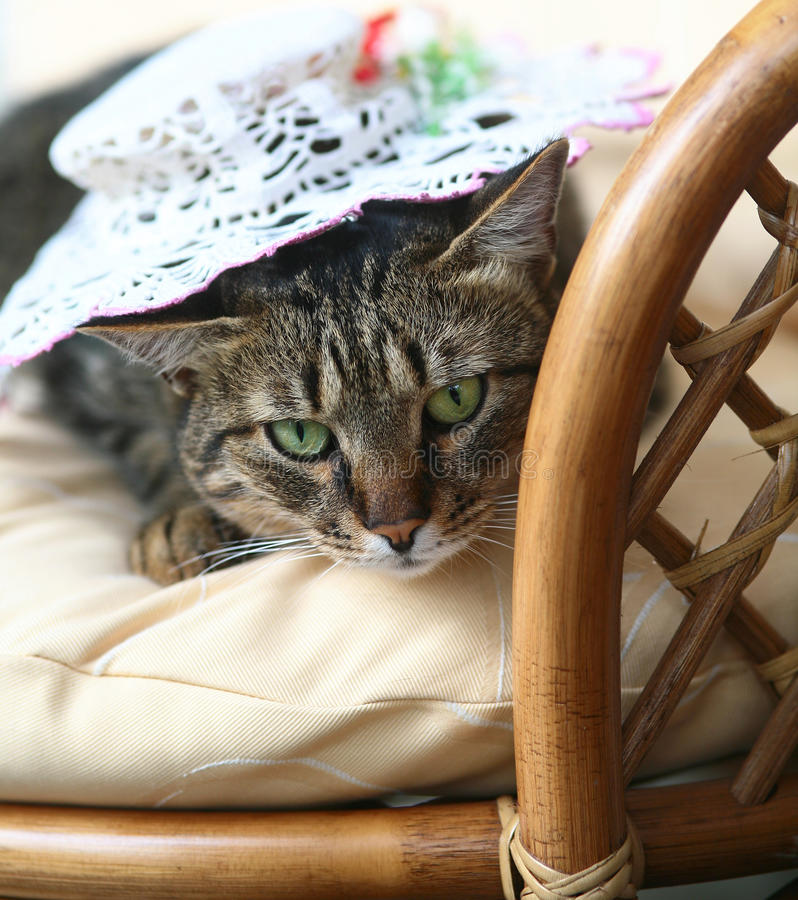 Download Cat in a hat. stock image. Image of sight, animals, eyes - 10812811