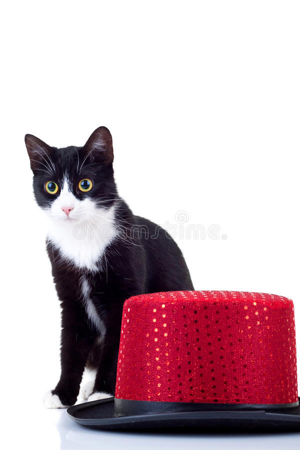 Cat and hat stock image