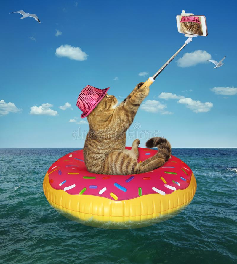 Download Cat In Hat Makes Selfie On Inflatable Circle Stock Photo - Image of summer, smartphone: 120760620