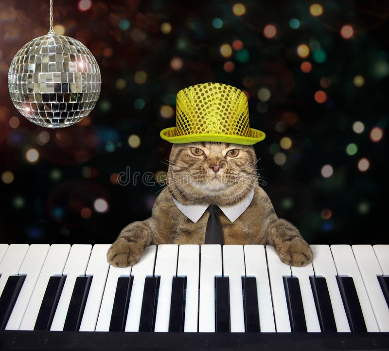 Cat in a hat plays the piano in a club stock photos