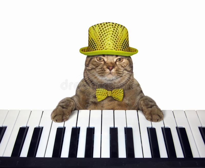 Cat in a hat plays the piano vector illustration