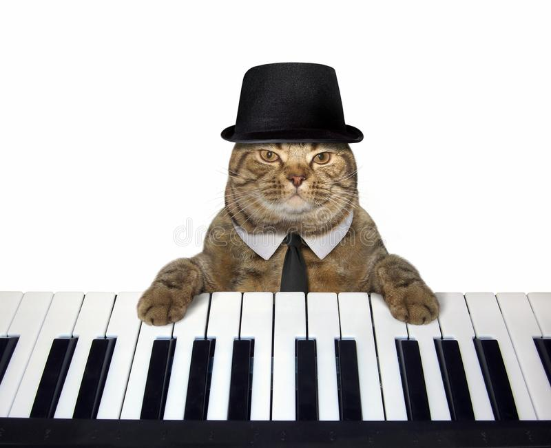 Cat in a hat plays the piano 3 royalty free stock photography