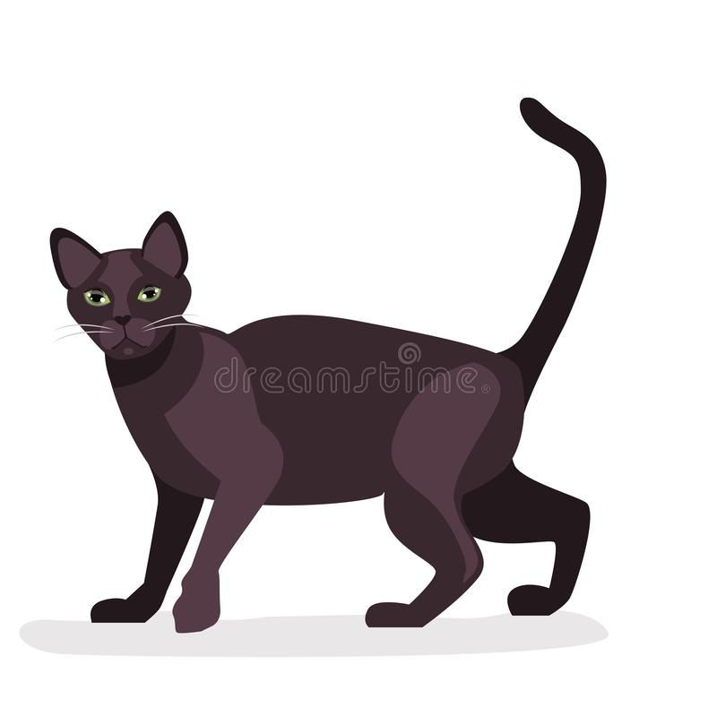 Cat Havana Brown Cartoon. Vector of purebred havana brown cat. Kawaii Style. isolated on White Background. vector royalty free illustration