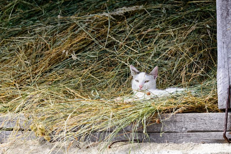 Cat In Hay arkivbild