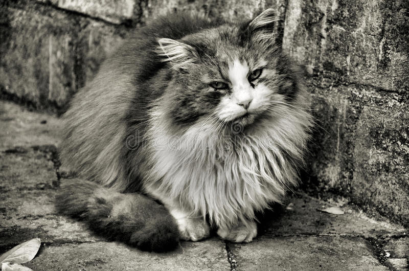 Download Cat HDR Stock Photography - Image: 22883062