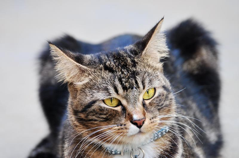 Download Cat Head stock image. Image of purr, curious, animal - 18362945