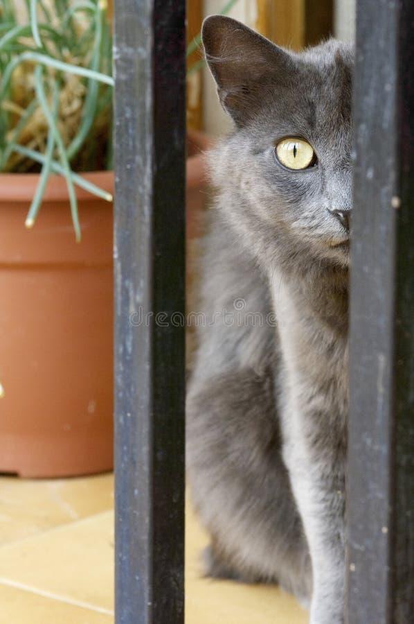 Cat Head photographie stock
