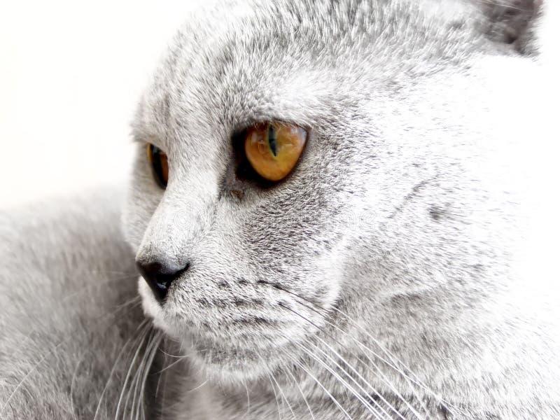 Cat head stock photography