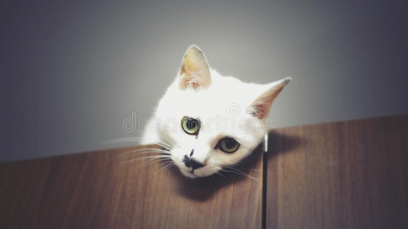 Cat head on table stock photo