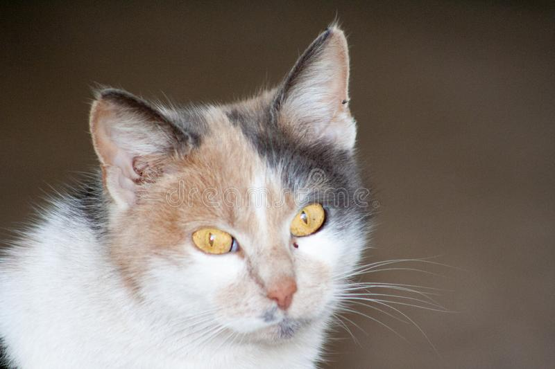 Cat with head tilted indoors. Cat is looking at camera royalty free stock photo