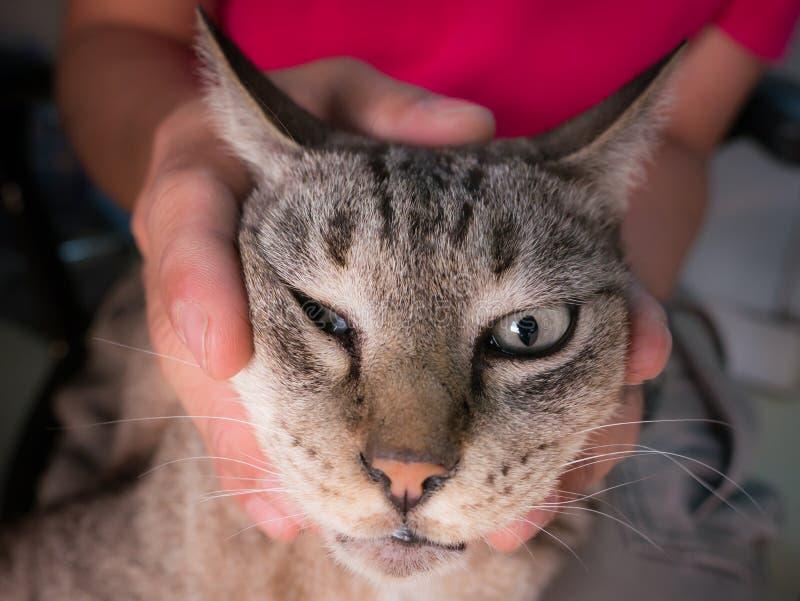 Cat Head Took attrapée par homme une photo photo libre de droits
