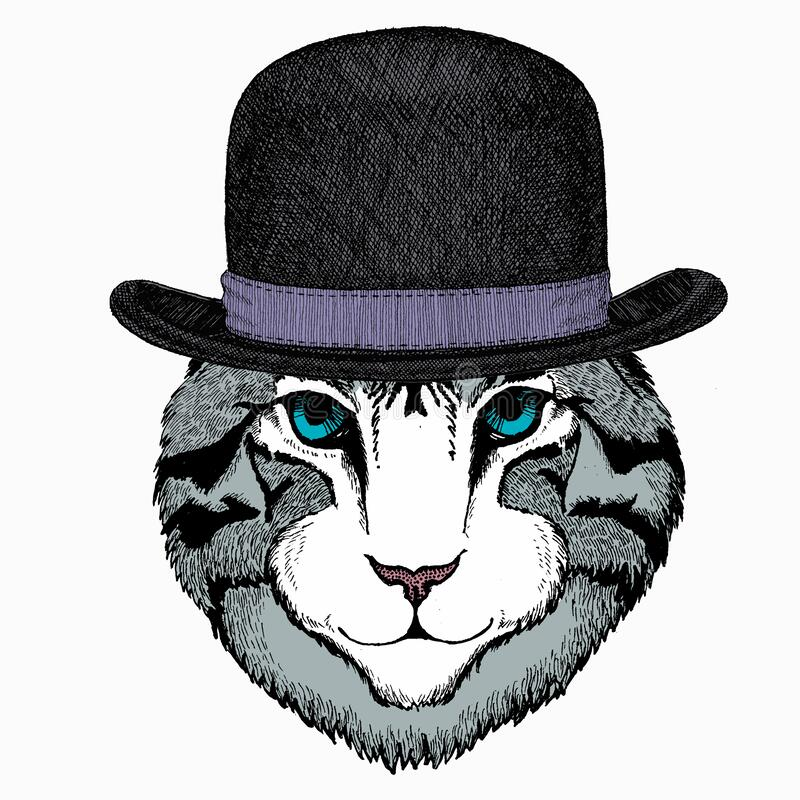 Free Cat Head. Vector Animal Portrait. Face Of Kitten. Bowler Hat. Royalty Free Stock Images - 215606799
