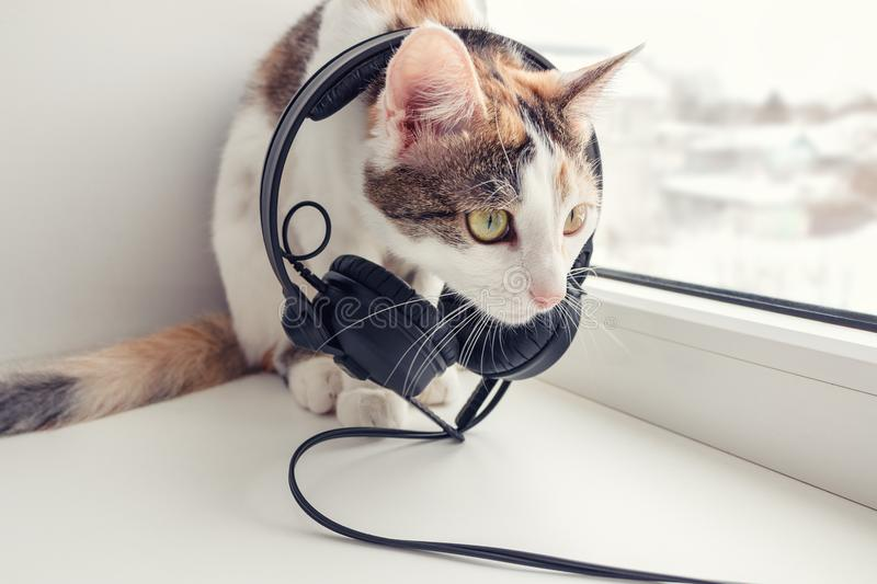 A cat with headphones on the windowsill.  stock photography