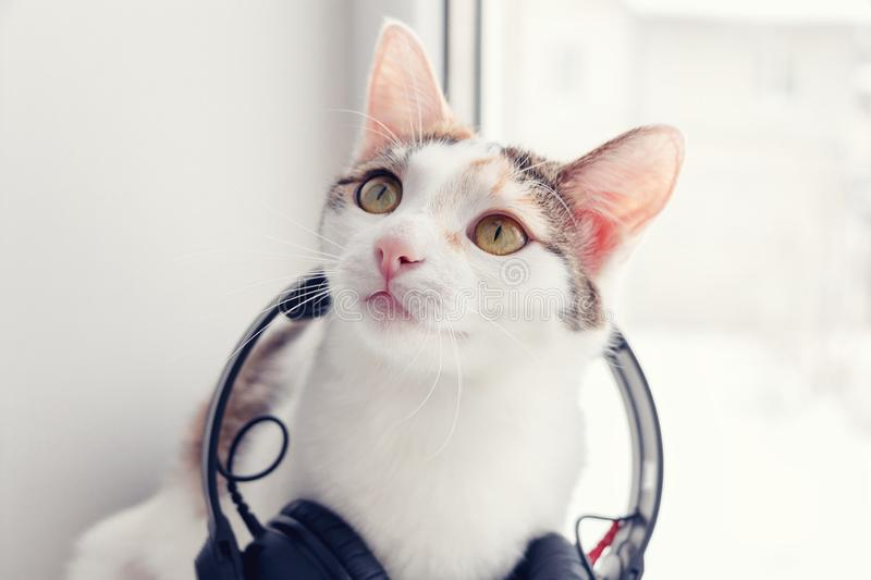 A cat with headphones on the windowsill.  royalty free stock images