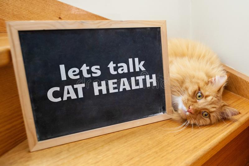 Cat health issue - ginger cat with text. Cat health issue - ginger cat with text on blackboard lets talk cat health stock photos