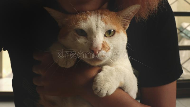 Cat Held irritada pela menina com t-shirt preto - cara infeliz foto de stock royalty free