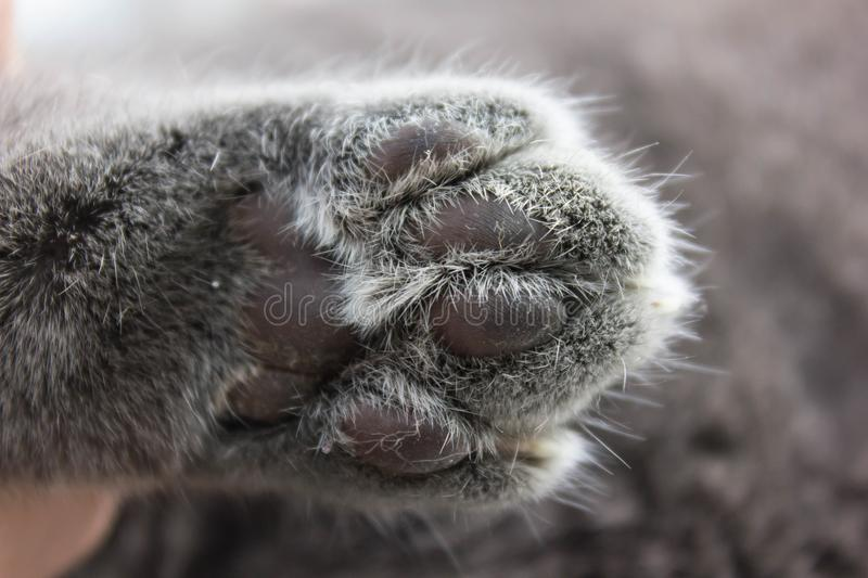 The cat hid behind a big book. We can see only cat& x27;s paw with long and sharp claws and whiskers. stock images