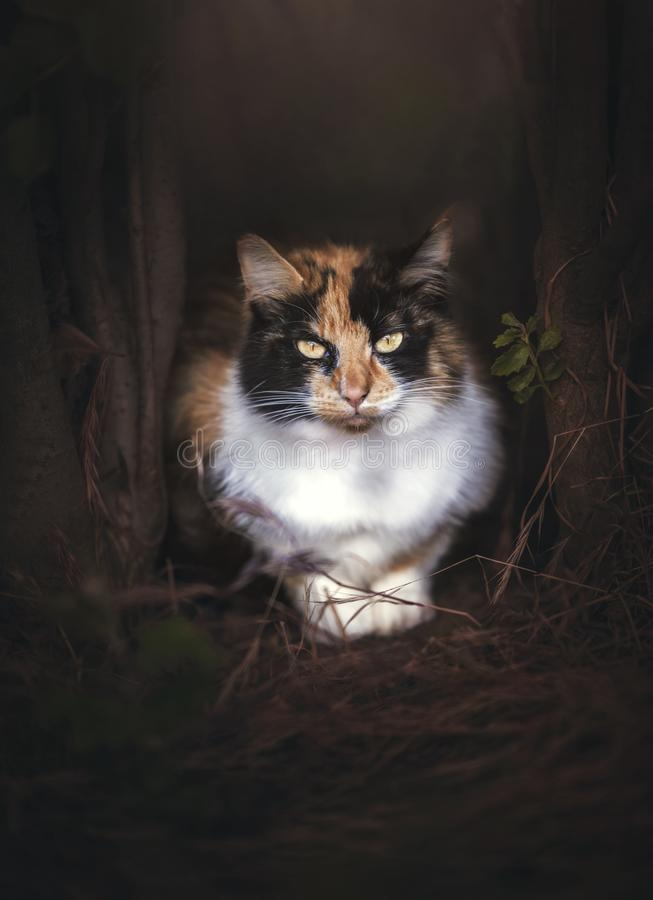 Cat Hidden salvaje entre los árboles fotografía de archivo