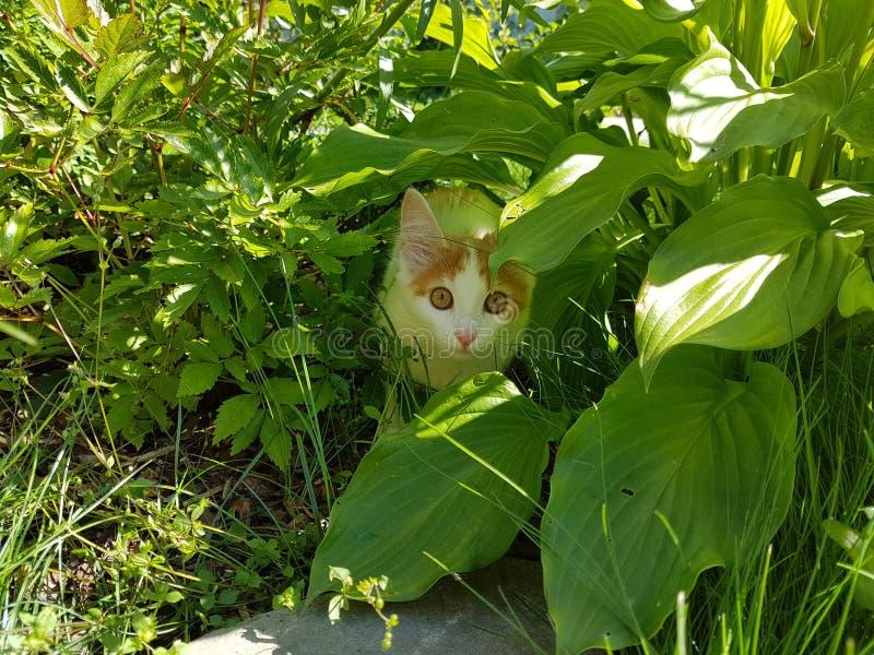 Cat Hiding foto de archivo