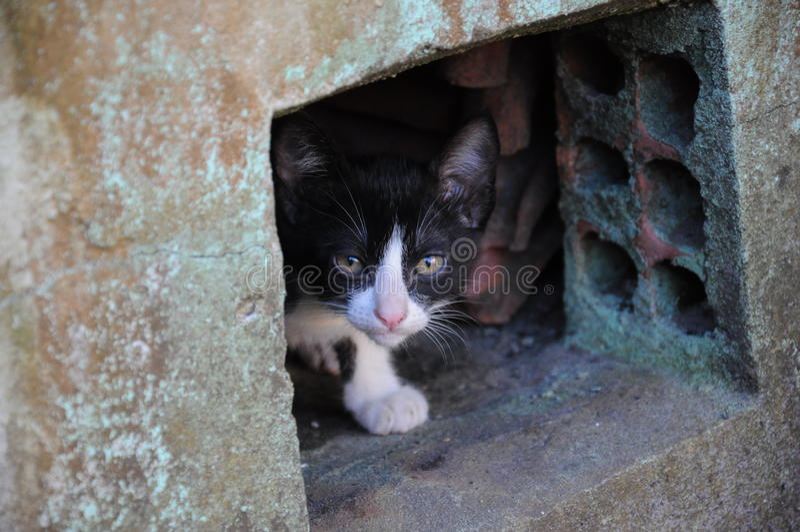 Cat Hiding fotografía de archivo