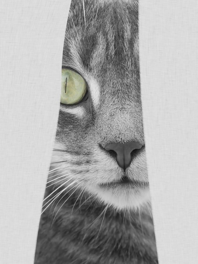 Cat hiding behind curtains royalty free stock images