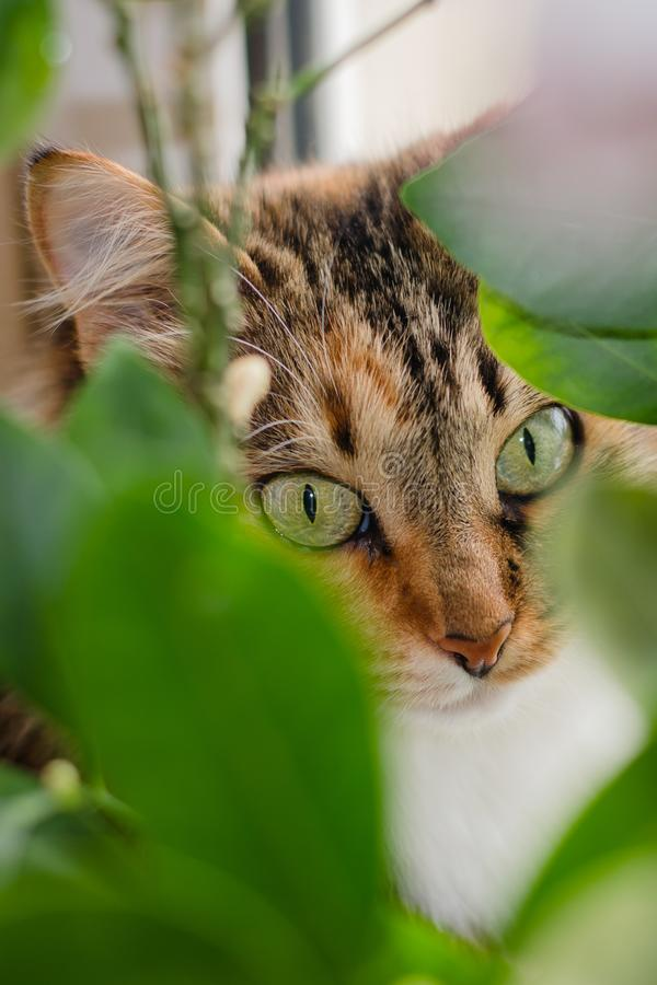 Cat hiding behind green leaves royalty free stock photos