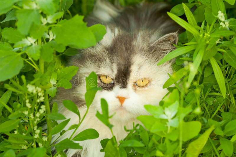 Download Cat hiding in grass stock photo. Image of camouflage - 15010476