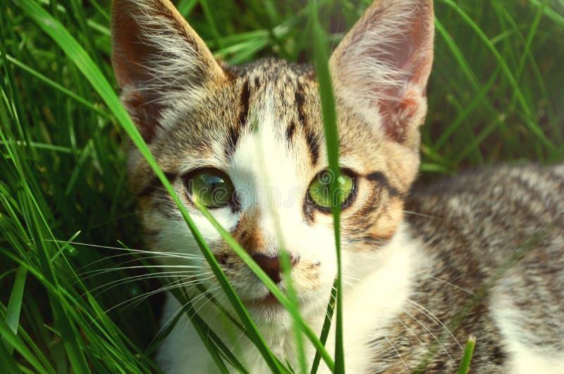 Cat Hiding In Grass Free Public Domain Cc0 Image