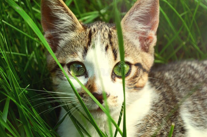 Cat hiding in grass stock photos