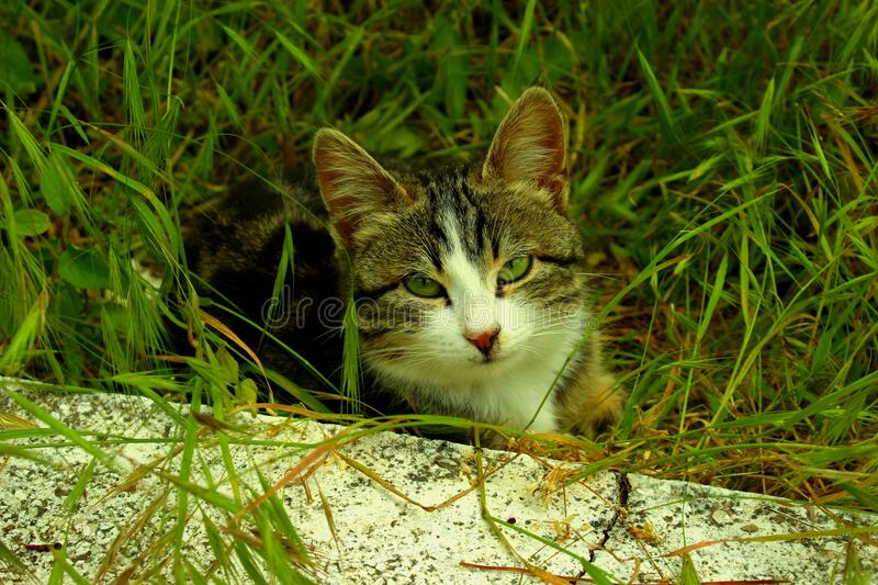 Cat hiding in grass stock images