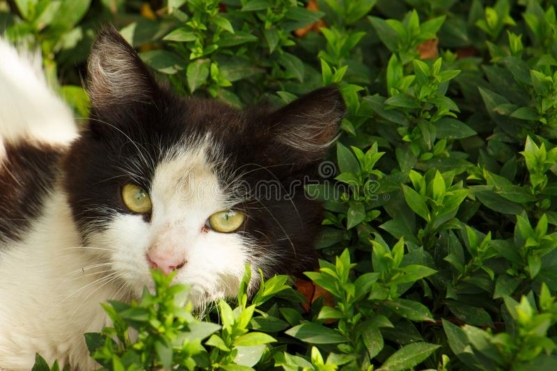 Cat head in green grass close up. Cat hiding in the grass in summer royalty free stock photography