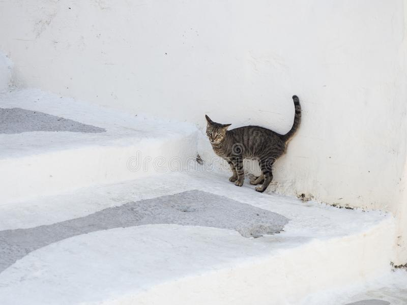 A cat is hiding from the hot sun on the white stairs of the narrow streets of Astypalaia royalty free stock image
