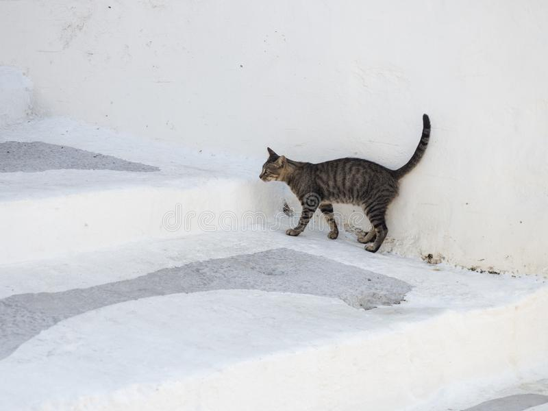 A cat is hiding from the hot sun on the white stairs of the narrow streets of Astypalaia stock photo