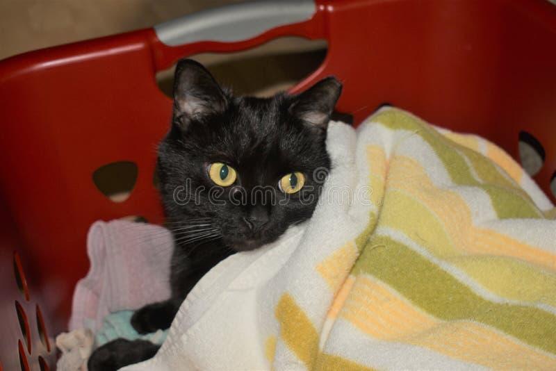 Cat Hiding noire dans la blanchisserie fraîche chaude photos stock