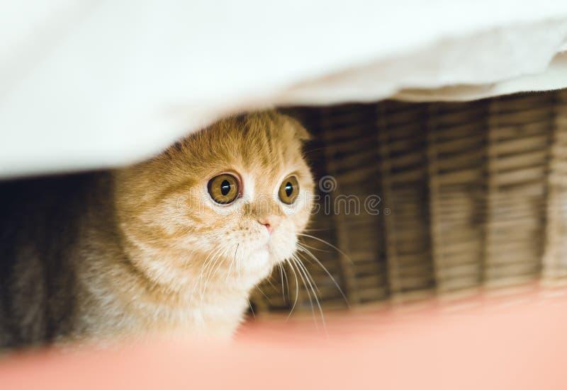 Cat hiding stock photography