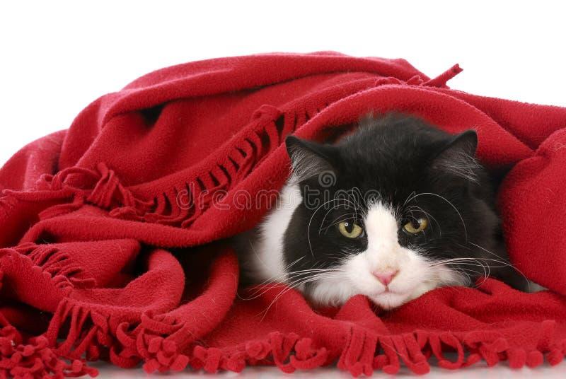 Download Cat hiding under blanket stock image. Image of breed - 15989371