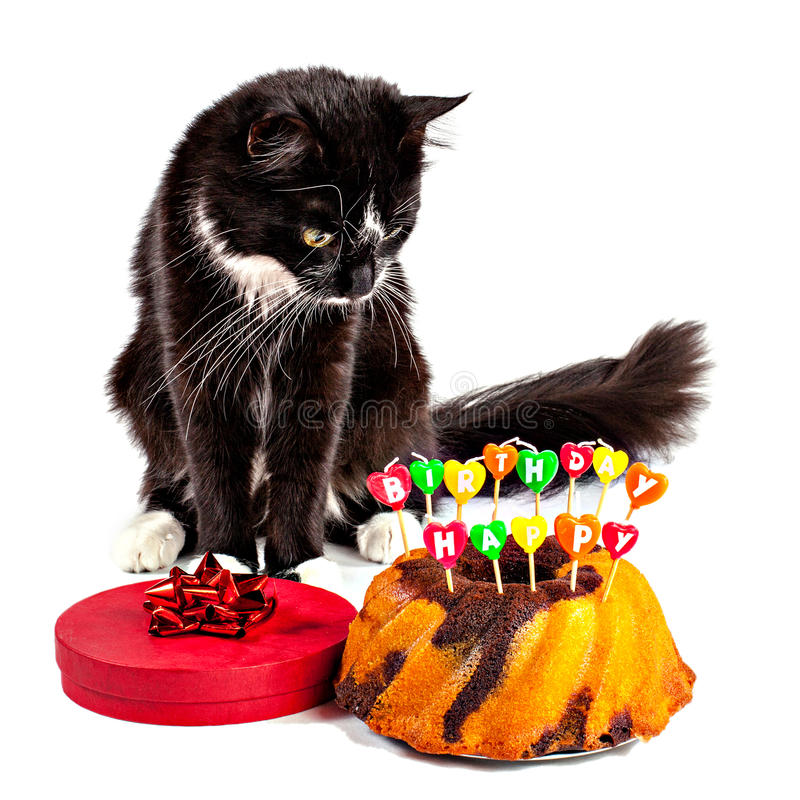 Cat With His Happy Birthday Cake Stock Image