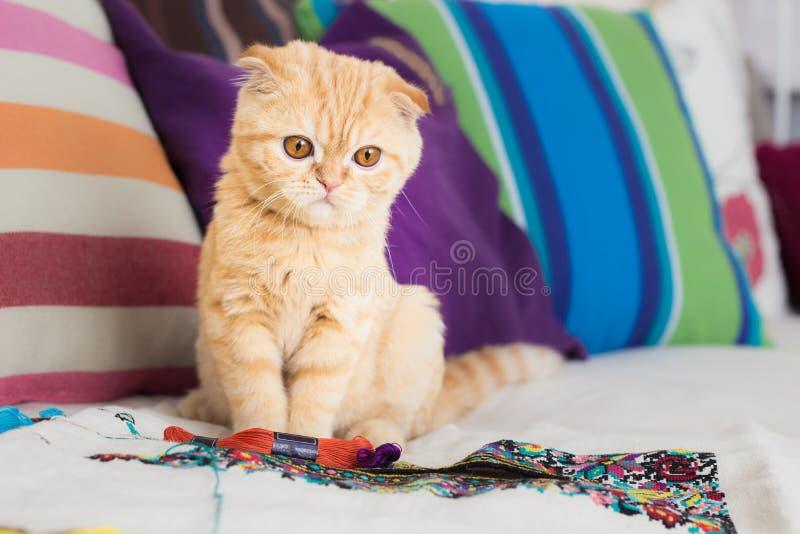 Cat and hobby stock photo
