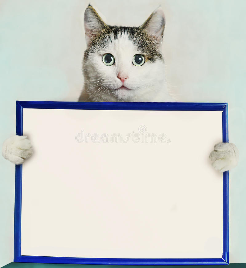 Cat hold blue frame with blank empty white paper. Cat close up portrait hold blue frame with blank empty white paper sheet with paws stock photo