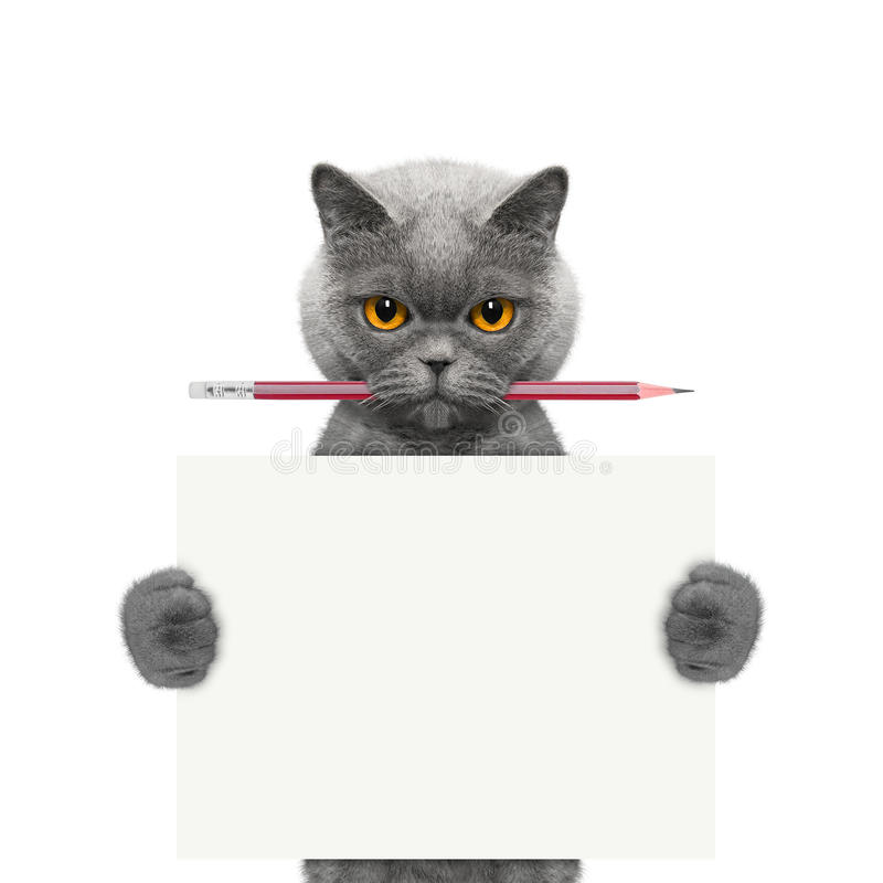 Cat holding a pencil and blank royalty free stock image