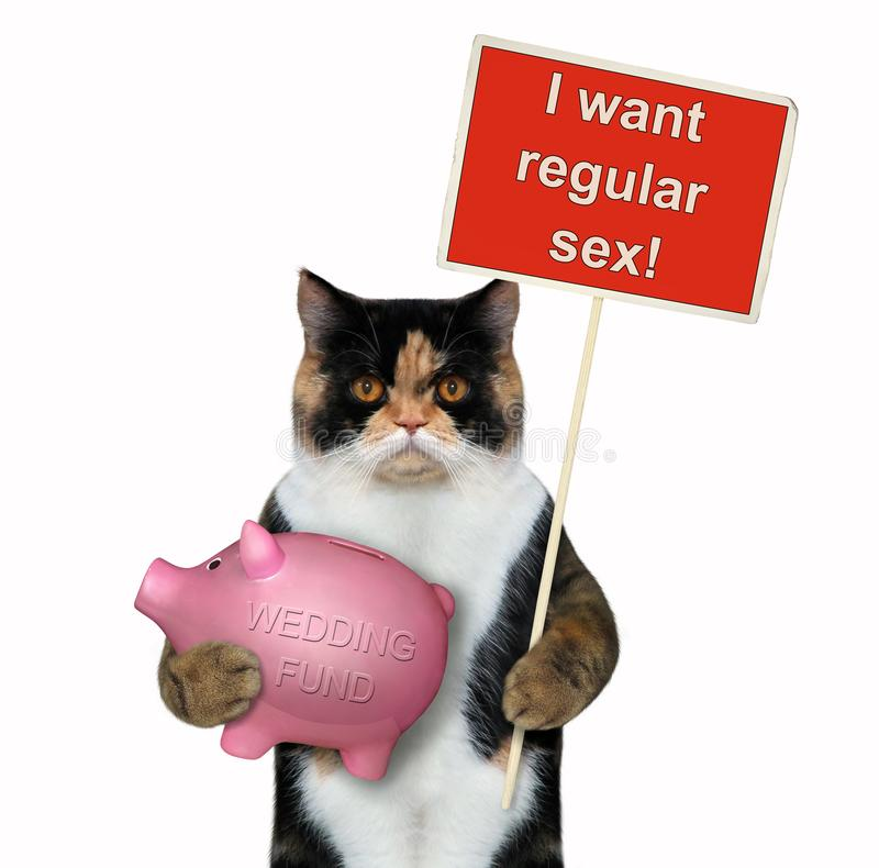 Cat holding a piggy bank and a sign royalty free stock image