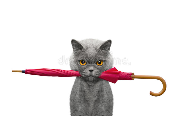 Cat is holding an umbrella stock images
