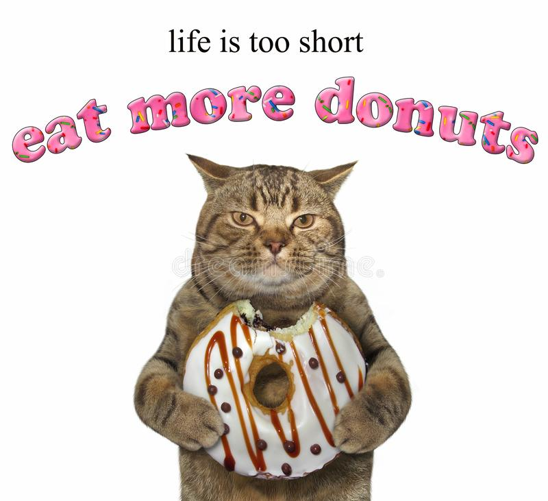 Cat holds a chocolate bitten doughnut. The cat holds a chocolate bitten doughnut. Life is too short. Eat more donuts. White background royalty free stock image
