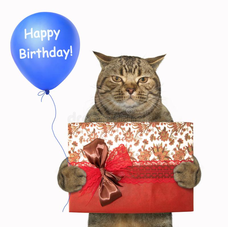 Cat with a gift box and a blue balloon stock photos