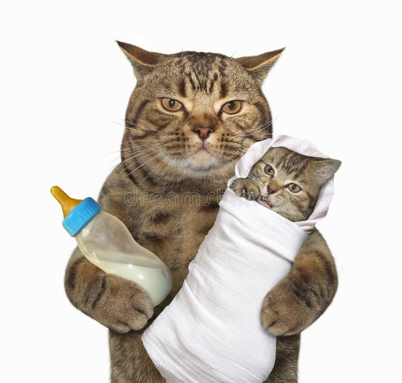 Cat with his kitten stock photography