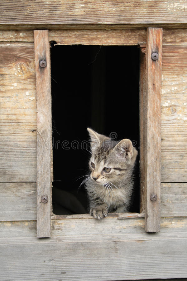 Cat at home royalty free stock photography