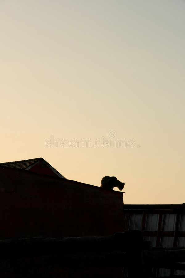 Cat On A Hot Tin Roof royalty free stock photo
